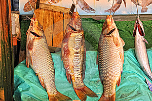 Fish Stall Stock Image - Image: 13736811
