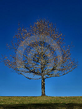 Solitary Tree Royalty Free Stock Photo - Image: 13738425