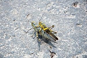 Grasshopper Stock Image - Image: 13740601