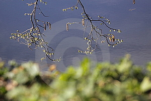 Branches Over River Royalty Free Stock Photo - Image: 13743505