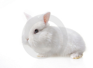 Cute baby rabbit Royalty Free Stock Photos