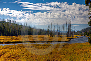 Lewis River - Yellowstone Stock Photo - Image: 13763700