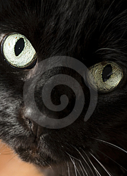 Kitty Close-up Royalty Free Stock Image - Image: 13766966