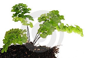 Plant. Growth Concept. Royalty Free Stock Images - Image: 13767909