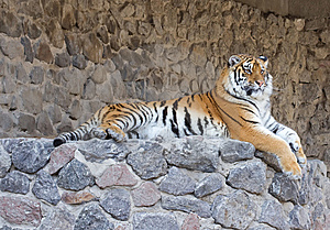 Tiger Stock Photos - Image: 13773613