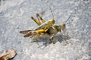 Grasshopper Stock Photos - Image: 13774993