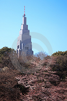 Cherry Blossom In Tokyo, Japan - March 2010 Royalty Free Stock Image - Image: 13776146