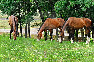 Horses On The Posture Royalty Free Stock Images - Image: 13777939