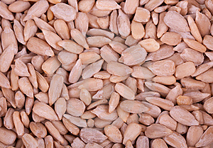 Sunflower Seeds Stock Images - Image: 13778284
