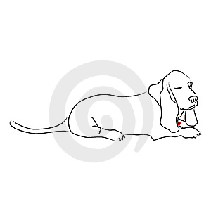 Sleepy Winking Basset Hound Stock Images - Image: 13782094