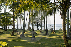 Palm Trees Garden. Royalty Free Stock Image - Image: 13793396