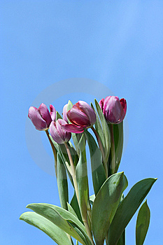 Spring Tulips Stock Photo - Image: 13798970