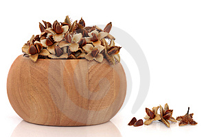 Beech Nuts Stock Photography - Image: 13799412