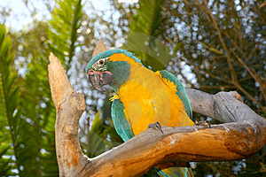 Tree Parrot Stock Photography - Image: 1382512