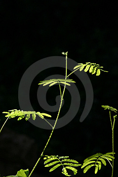 New Leaves #5 Royalty Free Stock Image - Image: 1386546
