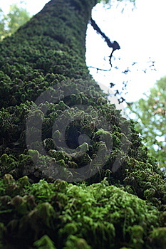 Moss On A Tree Stock Photography - Image: 13801062