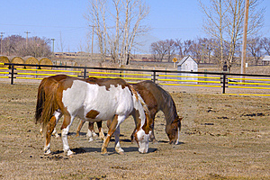 Two Horses Grazing On The Farm Stock Photography - Image: 13801302