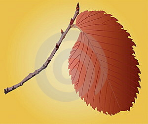 Sheet On A Sprig Stock Photo - Image: 13801480