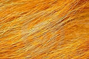 Fur Stock Photos - Image: 13802683