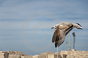 A Gull Stock Image - Image: 13805371