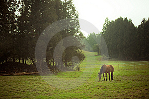 Attract Landscape With Horse Stock Image - Image: 13807841