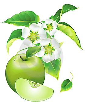 Floraison D'Apple Photographie stock libre de droits - Image: 13808657