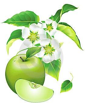 Florecimiento De Apple Fotografía de archivo libre de regalías - Imagen: 13808657