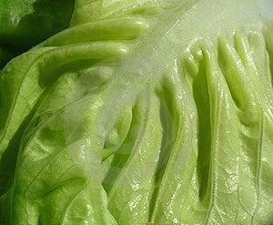 Légumes Feuillus Photo libre de droits - Image: 13809455