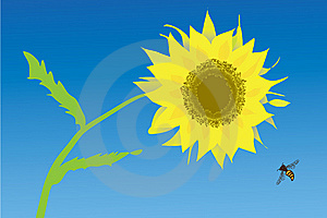 Sunflower And Bee Royalty Free Stock Images - Image: 13810189
