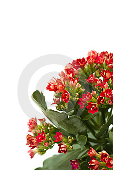 Plant Royalty Free Stock Photos - Image: 13811508