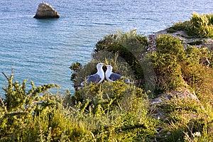 Seagulls In Love,praia Da Rocha Beach,portugal Stock Photos - Image: 13811833