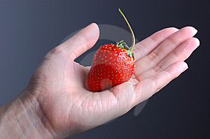 Strawberry In Hand Stock Photography - Image: 13812302