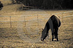Attract Landscape With Horse Royalty Free Stock Image - Image: 13813666