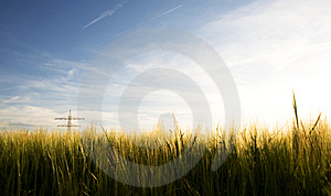Cornfield Royalty Free Stock Photos - Image: 13816128