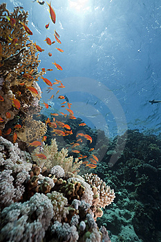 Ocean, Coral And Fish Stock Images - Image: 13818924