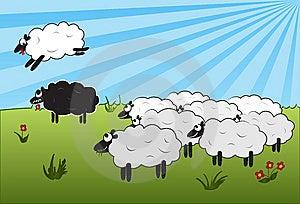 Jumping Over Black Sheep Stock Photos - Image: 13819763