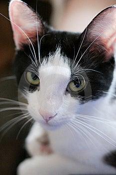 Sleepy Cat Royalty Free Stock Photo - Image: 13822605