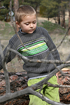 Playing In Forest Stock Photo - Image: 13825070