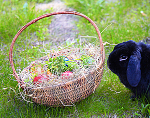 Easter Rabbit Stock Photography - Image: 13828232