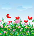 Meadow background Stock Images