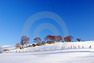 Trees In Snow Stock Images - Image: 13830004