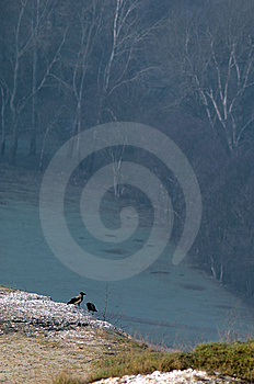 Crows On A Hill Royalty Free Stock Photo - Image: 13830325