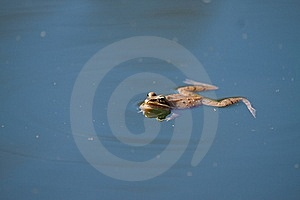 Frog Stock Photography - Image: 13831132