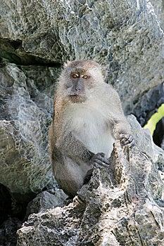 Monkey Stock Image - Image: 13831161