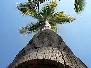 Palm Tree Stock Photography - Image: 13838522