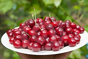 Tasty Cherries Stock Images - Image: 13844814