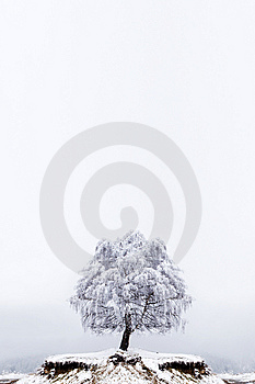Winter Solitude Tree Royalty Free Stock Photos - Image: 13848218