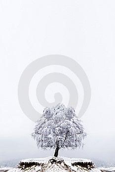 Winter Solitude Tree Royalty Free Stock Photos - Image: 13848218