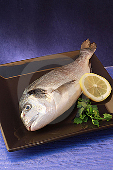 Sea Bream Royalty Free Stock Photo - Image: 13849355