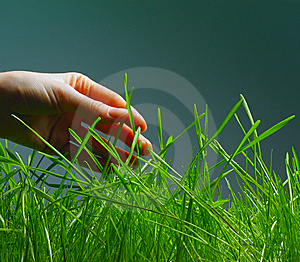 Grass Royalty Free Stock Photo - Image: 13851835